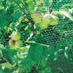 Pivoine Herbacée De Jardin Sorbet