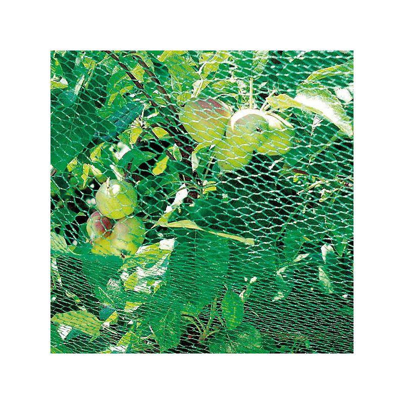 JARDIN graines RARE exot pluriannuelle vivace bâtons d/'encens-Plante