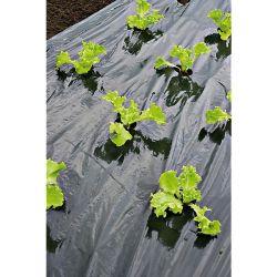 agrumes plants greffés
