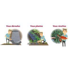BRISURES de PLANTES BRISURE de CONSOUDE