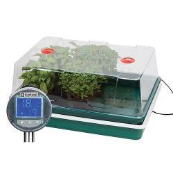 ARMOISE CITRONNELLE ou herbe aux cent goûts
