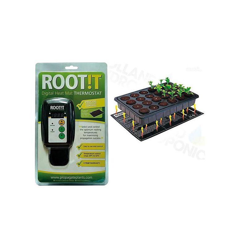 TOMAAT GREEN GRAPE (raisin vert)