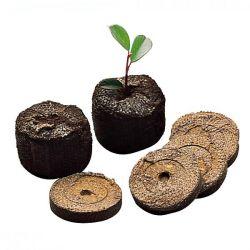 Pomme De Terre La Violette®, Vitelotte Noire