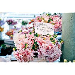 TULIPE fleur de lis ROMANO