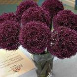 Graines baumaux semences potag res bulbes fleurs et for Planter oignon amaryllis
