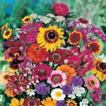 BOUQUET DE COULEUR MULTICOLORE