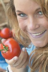 Kultur der tomate
