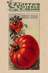 Petite histoire de la tomate - Ancien sachet de tomate