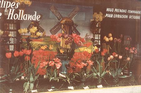 fleurs vitrine