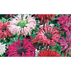 Bomottes florales