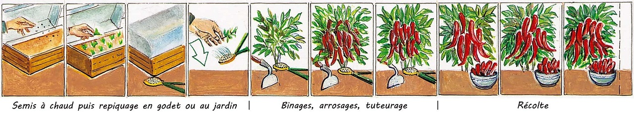 Tableau synoptique - PIMENT NICASTRESE Bio