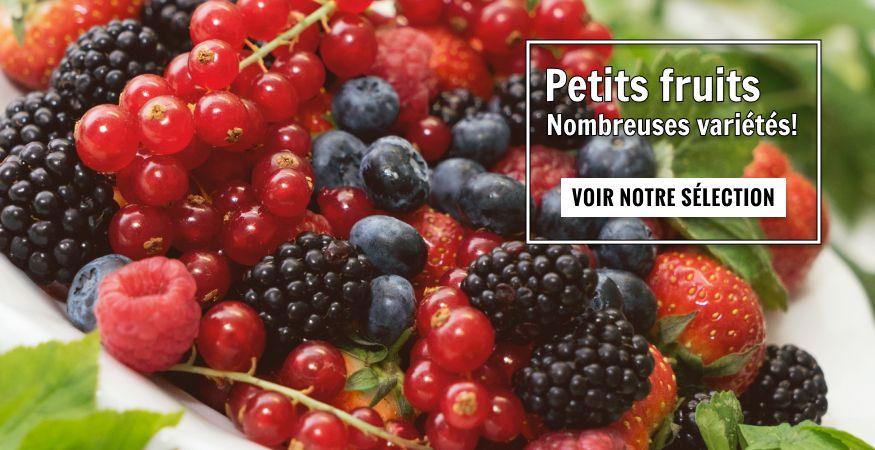 Petits fruits
